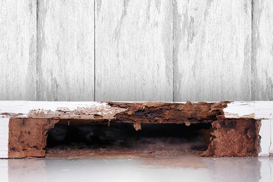 Termite Damaged Wood — Pest Control in Sunshine Coast, QLD